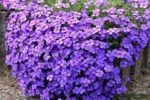 14 удивительно красивых растений, которые стоит посадить в саду