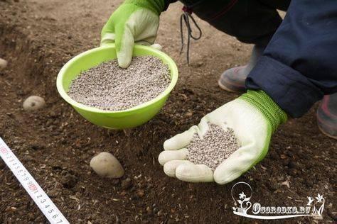 Яичная скорлупа как удобрение для рассады помидор