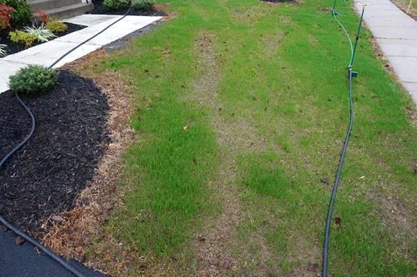 Сеялка для газона – залог красивой и ухоженной лужайки перед домом