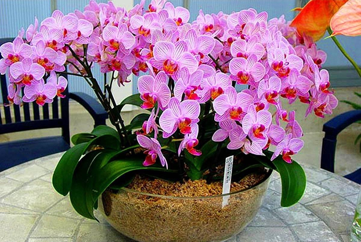 Какое нужно удобрение для цветения орхидей?