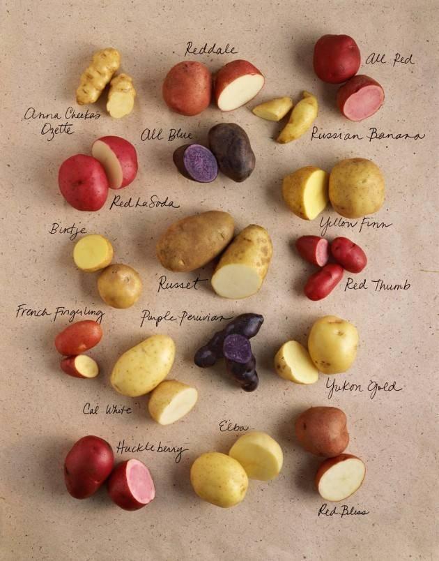 Цветной картофель – эликсир вечной молодости