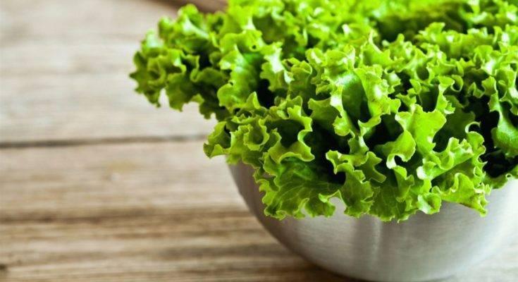 Польза салата листового: польза листового салата для женщин