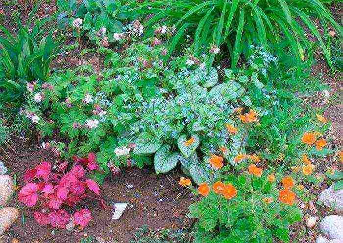 Брунера: роскошна и неприхотлива, или цветок, обязательный к посадке