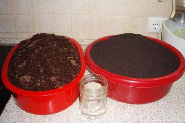 Выращивание шпината на подоконнике, требующее точных знаний