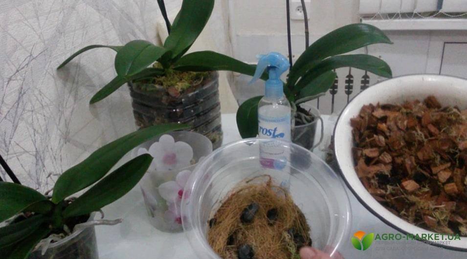 Как ухаживать за рассадой баклажанов в домашних условиях
