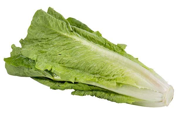 Как подготовить семена салата к посеву на рассаду