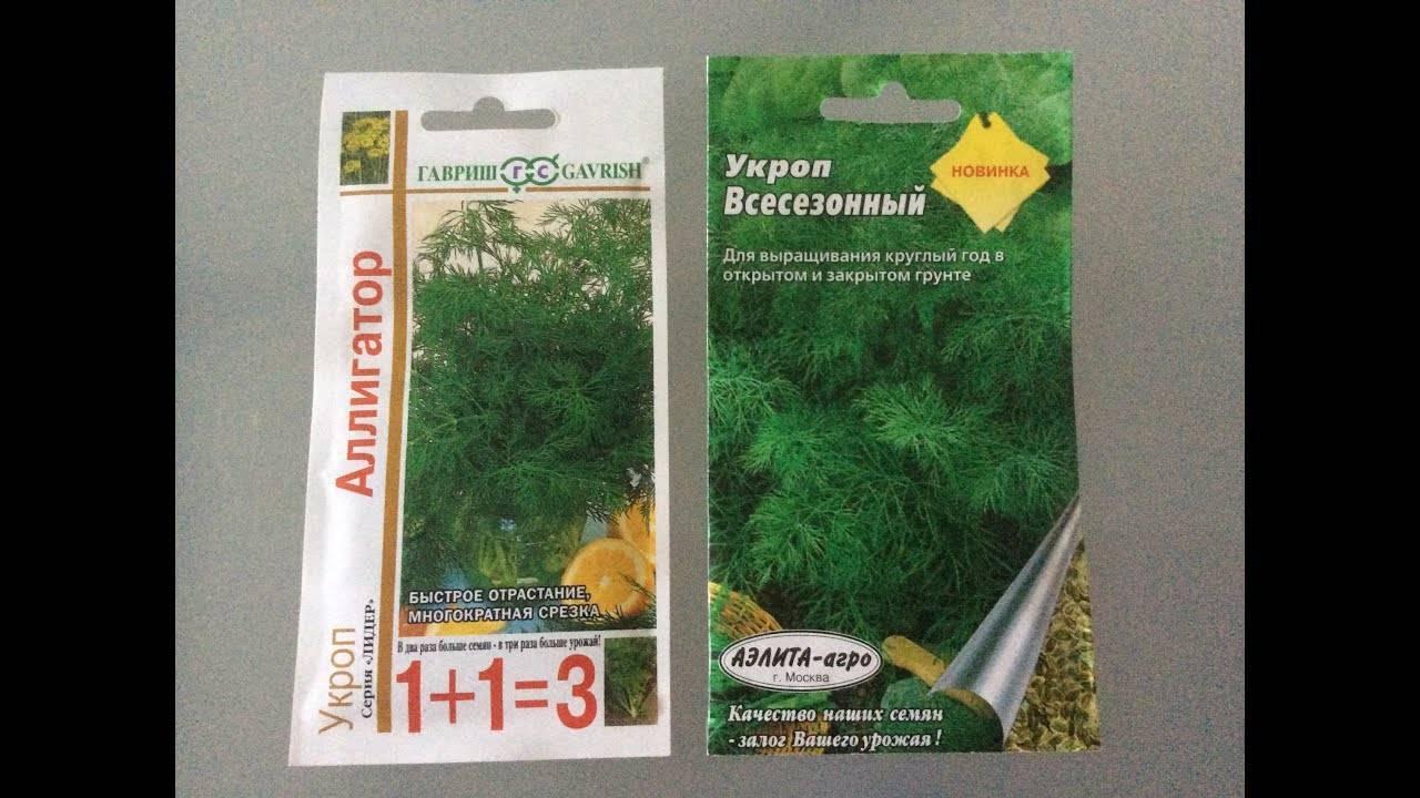 Подготовка земли для укропа при выращивании в открытом грунте, в теплице и в квартире