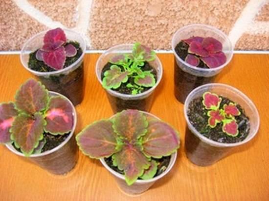 Когда и как сажать однолетние цветы на рассаду — советы и рекомендации