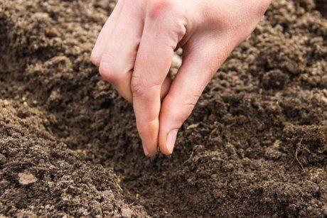 6 самых частых проблем при выращивании редиса