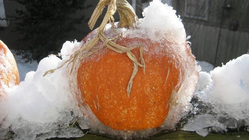Заморозка тыквы на зиму в домашних условиях, как готовить, видео
