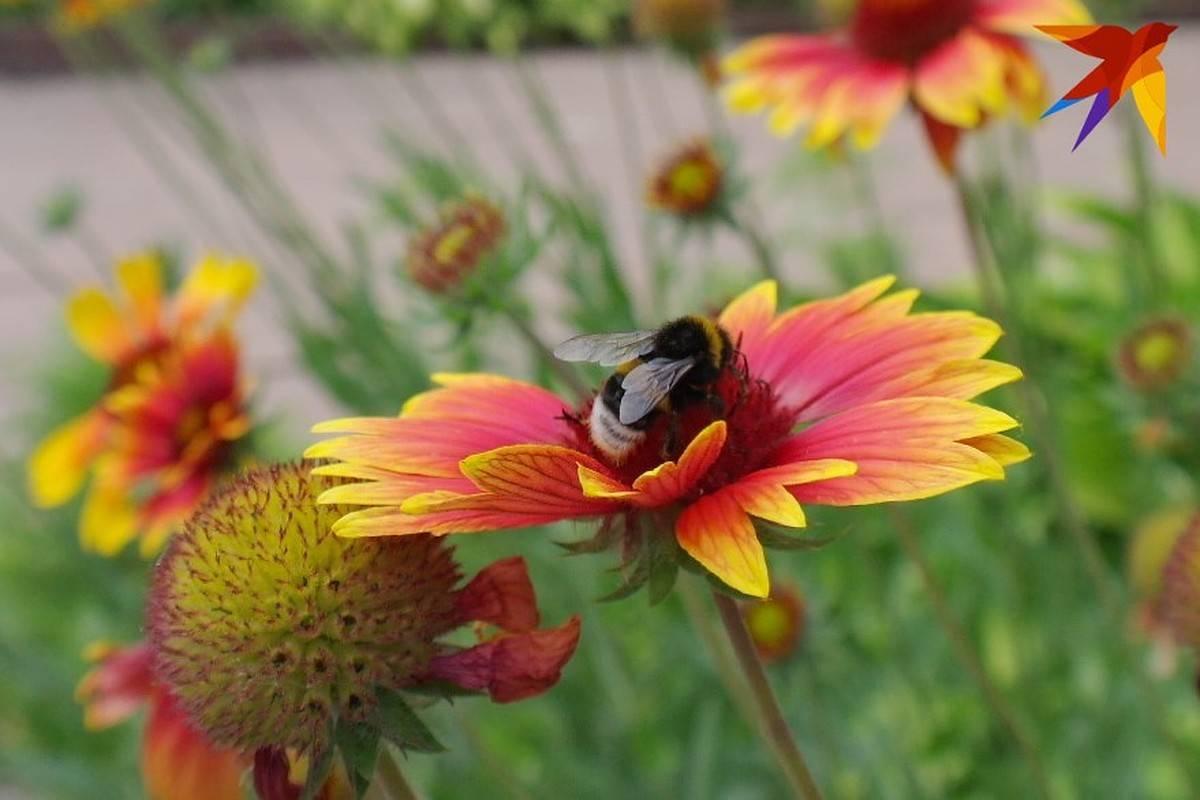 Пчелодомики для апитерапии