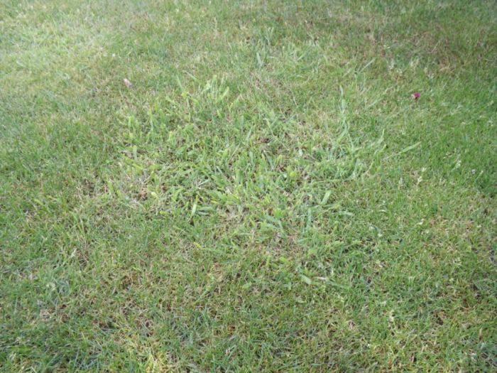 Посадка газонов: основные правила и полезные советы. как посеять газонную траву