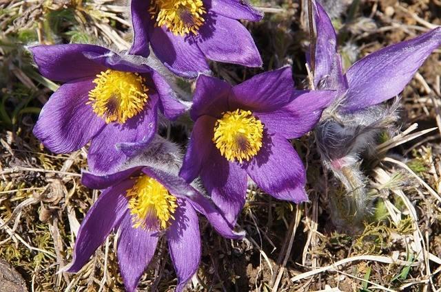Апрель - сезонные работы в саду, видео