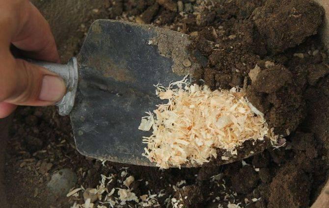 Использование опилок в саду и огороде для мульчирования, удобрения почвы и её разрыхления: польза и вред
