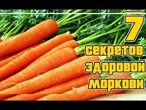 Как вырастить хорошую морковь на даче.