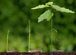 Удобрение циркон для комнатных растений: правила использования препарата