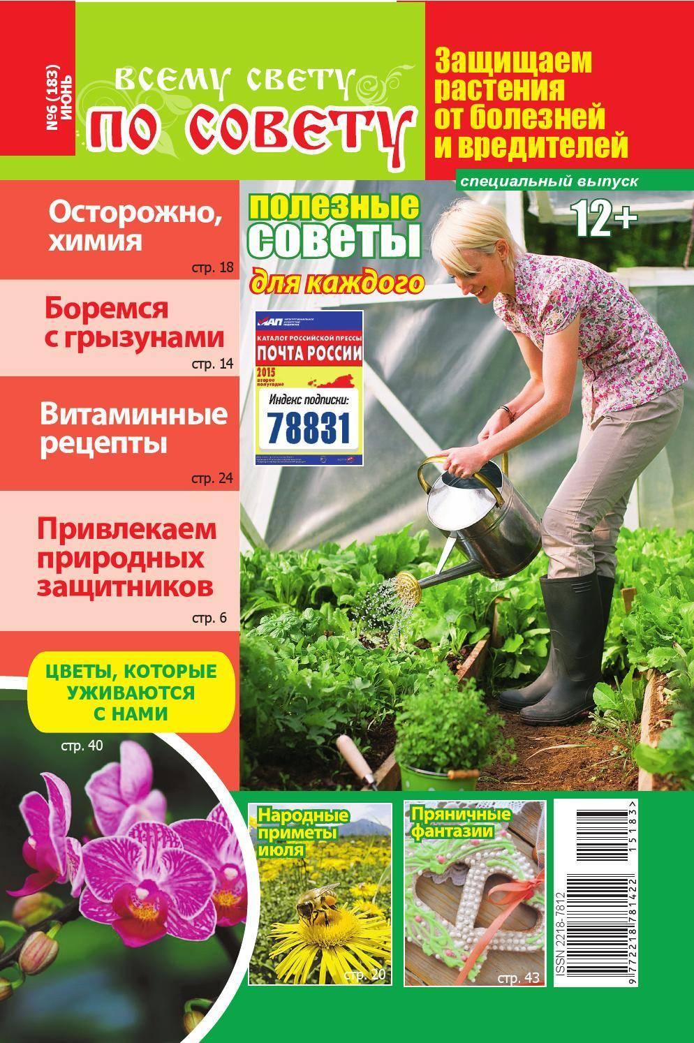 Как вырастить черемшу на огороде из семян