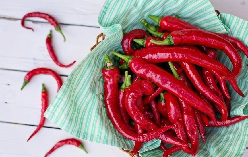 Выращивание перцев чили в домашних условиях: лучший сорт, подготовка к посадке, сеем рассаду, уход, пересадка и подкормка