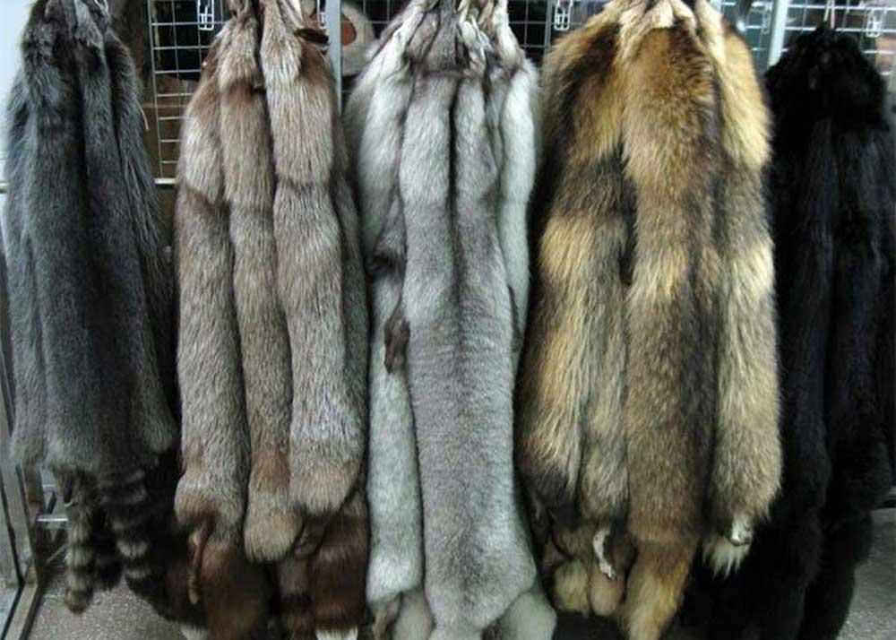 Выделка шкур лисы. простые секреты выделки шкуры лисы в домашних условиях. как различают шкурки по сортам