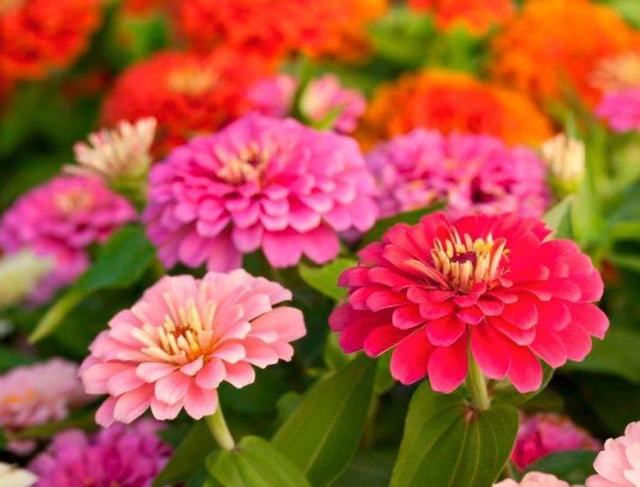 Особенности выращивания рассады овощных растений и цветов в торфяных горшочках