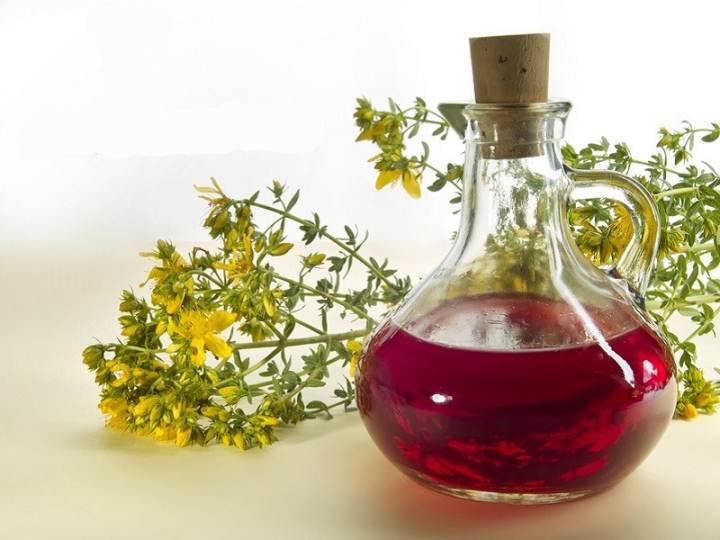 Трава зверобой — лечебные свойства и противопоказания для женщин и мужчин