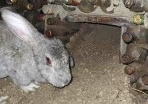 Методики разведения и содержания кроликов