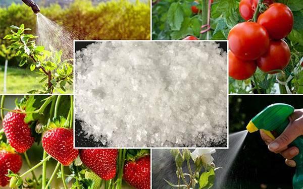 Применение борной кислоты в огородничестве и садоводстве, видео