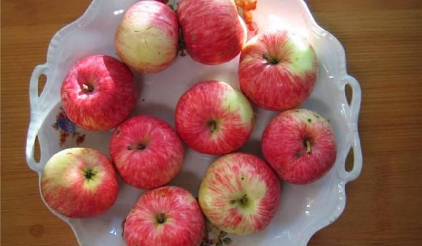 Любимица дачников – яблоня грушовка