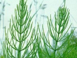 Лекарственные растения: свойства, применение и противопоказания