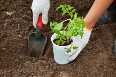 Органоминеральное удобрение синьор помидор в помощь дачнику
