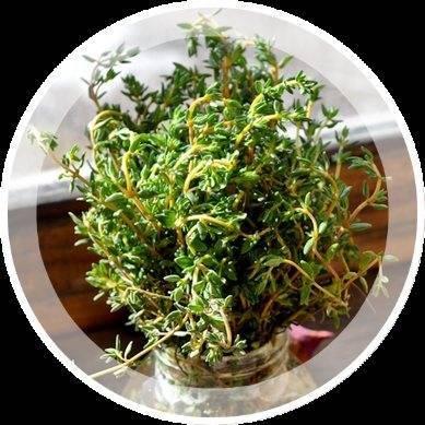 Выращивание бархатцев из семян: сроки, правила посадки на рассаду, ухода, пикировки, высадки