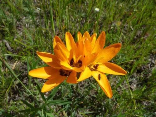 Гортензия «бесконечное лето»: описание, посадка и уход