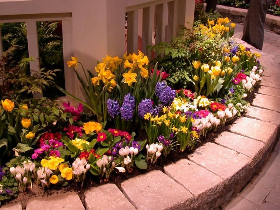Клумбы на даче своими руками: фотографии самых красивых цветников
