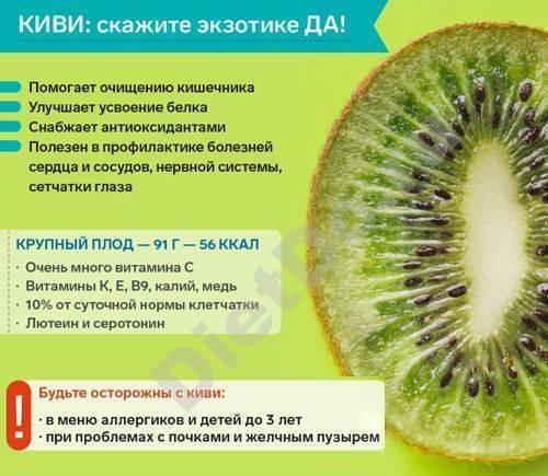 Актинидия: полезные свойства и противопоказания, отзывы