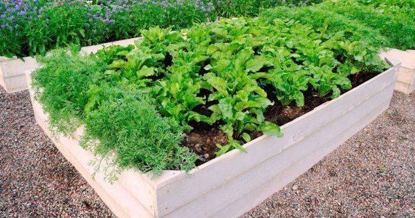 Как вырастить сочную и хрустящую морковь в открытом грунте