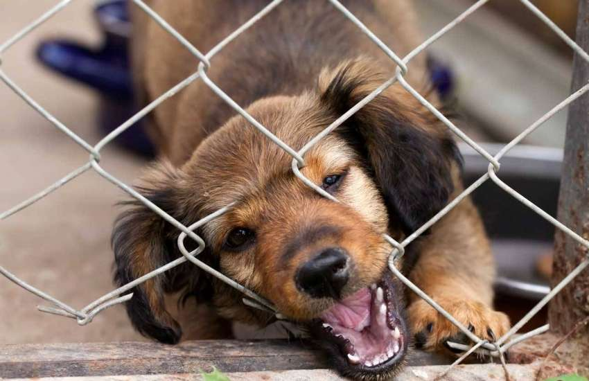 Территория питомца – как сделать вольер для собаки своими руками из подручных материалов?