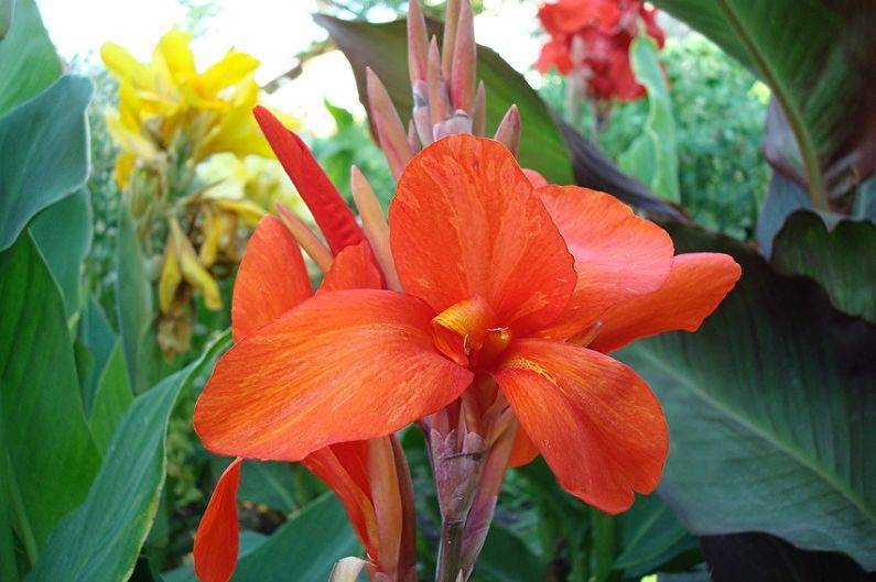 13 декоративных кустарников и деревьев, которые цветут в апреле-мае