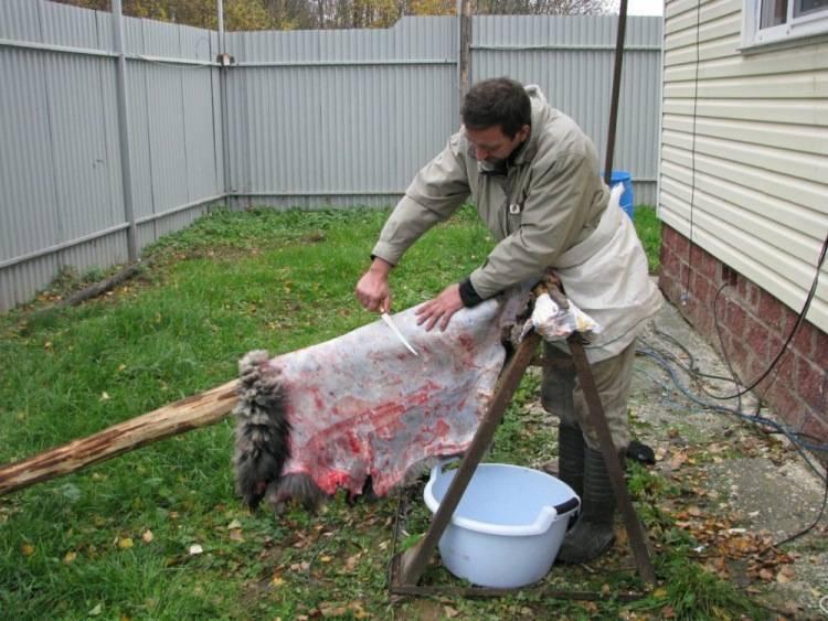 Выделка шкуры лисы в домашних условиях поэтапно. порядок действий, как выделать шкуру лисы в домашних условиях. выделка лисы по технологии компании «lowenstein»
