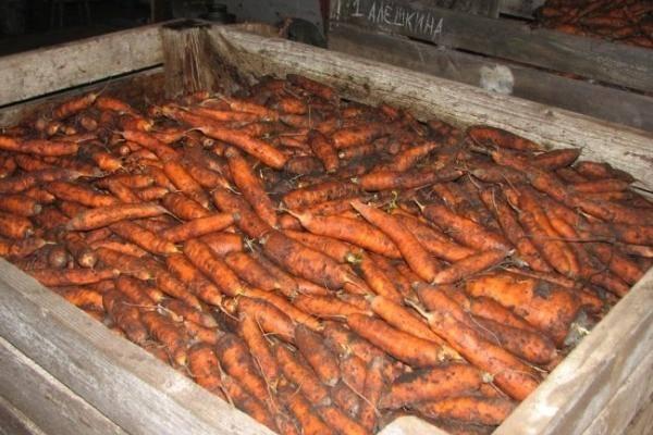 8 способов хранения моркови зимой в домашних условиях
