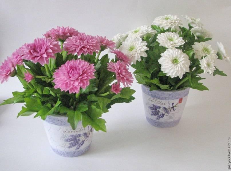 Комнатная хризантема в горшке: уход в домашних условиях, посадка и пересадка, особенности посезонного выращивания растения
