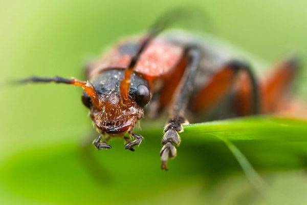 Знакомимся с чудесным насекомым — жук-знахарь
