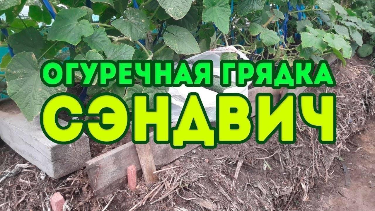 Грядка для огурцов — 105 фото и видео описание постройки правильных огуречных грядок