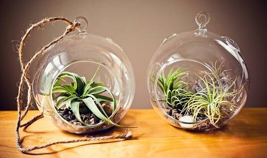 Выращивание каскадной и суперкаскадной петунии