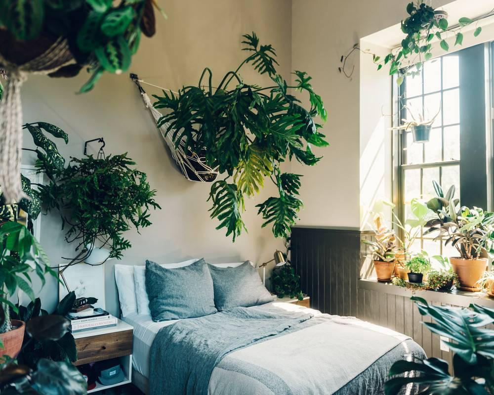 Комнатные растения, которые нельзя держать дома, фото, названия, а какие можно?