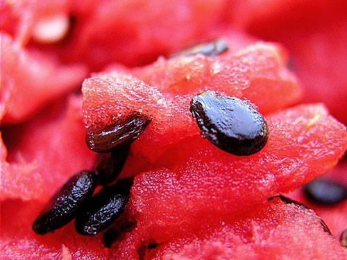 Полезны ли арбузные семечки