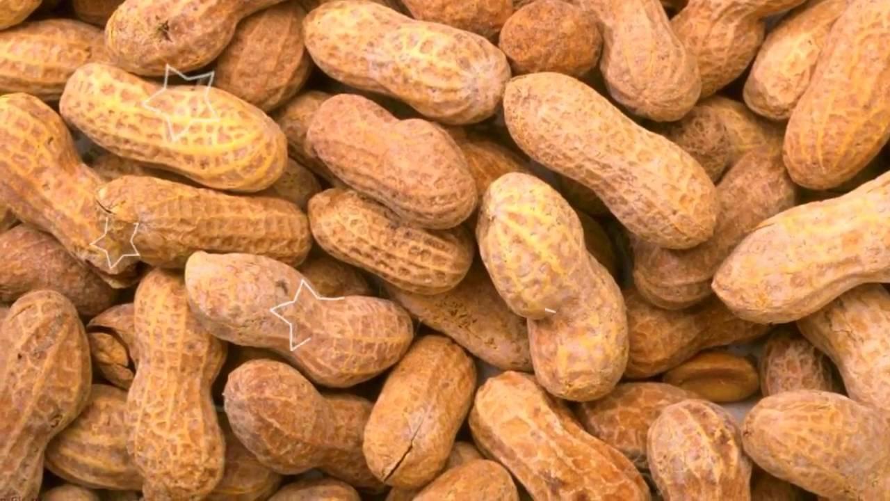 Самое важное о пользе и вреде арахиса
