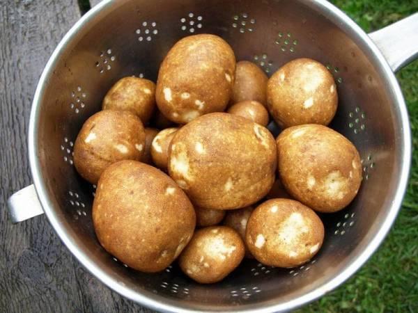 Сорт картофеля киви: основные характеристики и советы по выращиванию