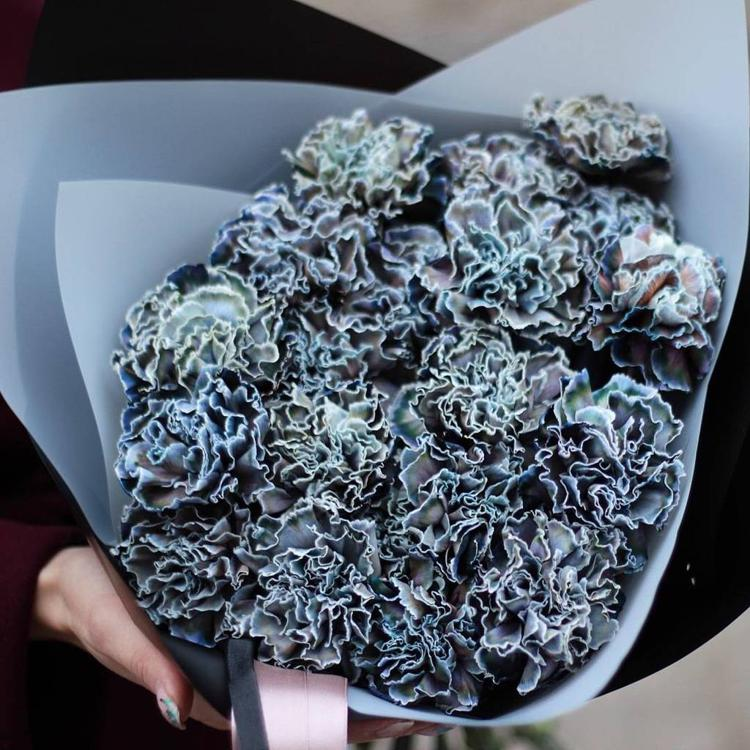 Гвоздика китайская махровая выращивание из семян