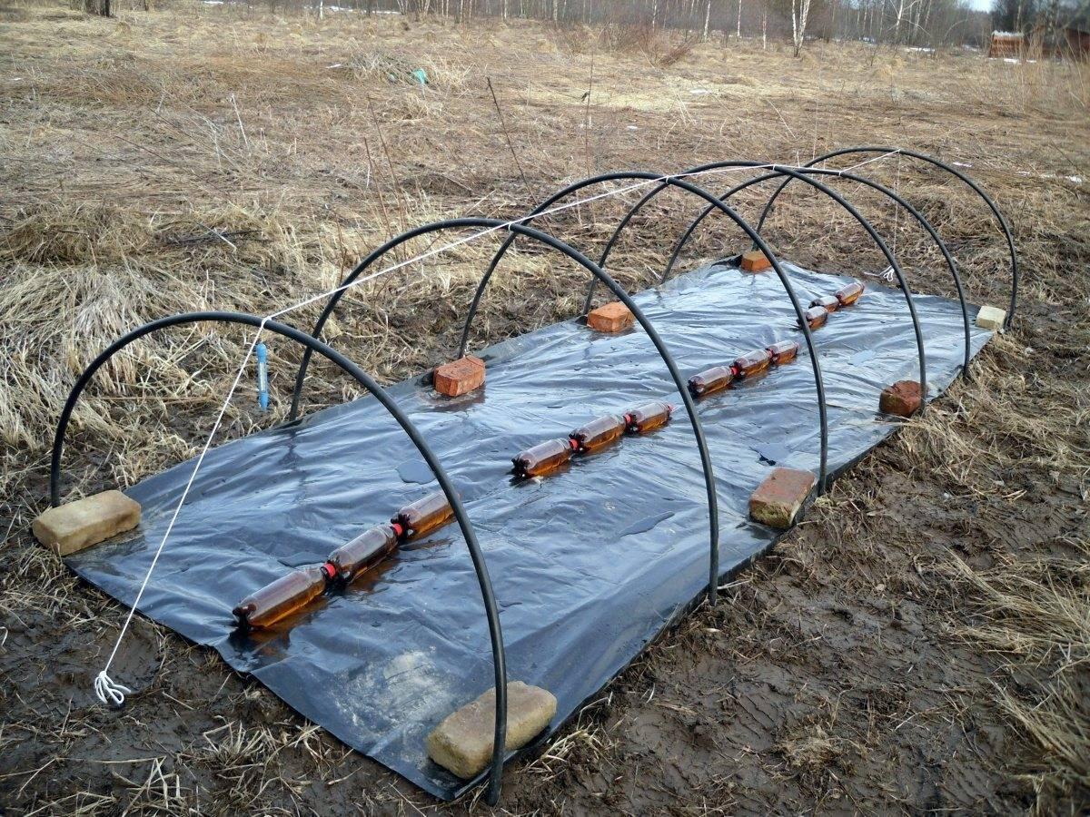 Применение временных пленочных укрытий для огурцов