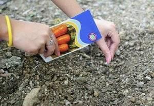 10 способов, как правильно посадить морковь в грунт, чтобы не прореживать.